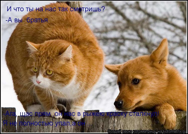 Котоматрица: И что ты на нас так смотришь? -А вы  братья -Ага, щас прям ,он нас в рыжею краску сталкнул!  Я не полностью упал,а он ...