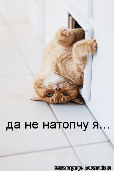 Котоматрица: да не натопчу я...