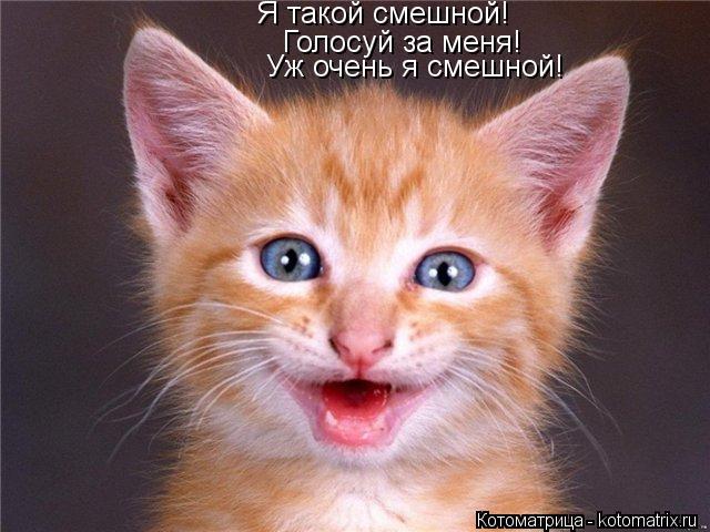 Котоматрица: Я такой смешной! Голосуй за меня! Уж очень я смешной!