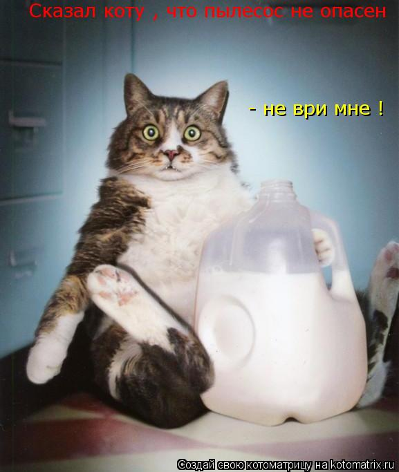 Котоматрица: Сказал коту , что пылесос не опасен - не ври мне !