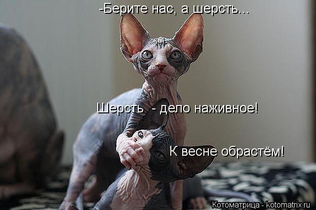 http://kotomatrix.ru/images/lolz/2013/11/28/kotomatritsa_us.jpg