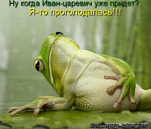 Котоматрица: Ну когда Иван-царевич уже придет? Я-то проголодалась!!!