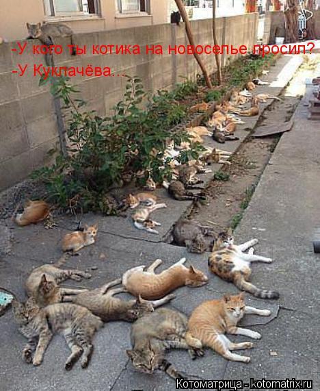 Котоматрица: -У кого ты котика на новоселье просил? -У Куклачёва...
