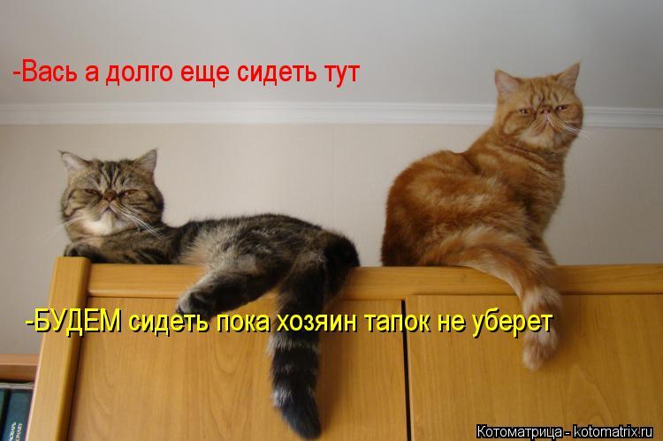 Котоматрица: -Вась а долго еще сидеть тут -БУДЕМ сидеть пока хозяин тапок не уберет