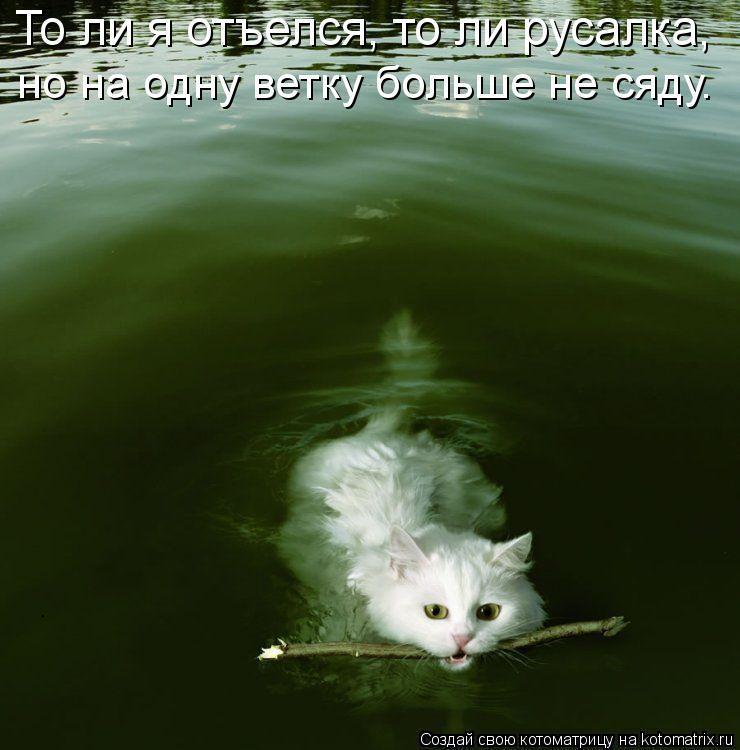 Котоматрица: То ли я отъелся, то ли русалка, но на одну ветку больше не сяду.