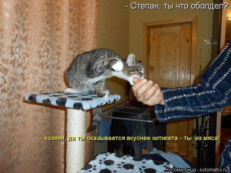 Котоматрица: - Степан, ты что оболдел? - хозяин, да ты оказывается вкуснее китикета - ты  из мяса!