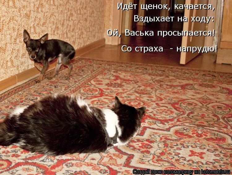 Котоматрица: Идёт щенок, качается, Вздыхает на ходу: Ой, Васька просыпается! Со страха  - напрудю!
