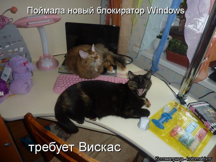 Котоматрица: Поймала новый блокиратор Windows требует Вискас