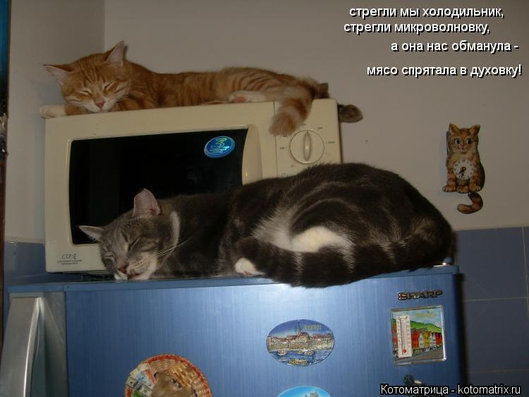 Котоматрица: стрегли мы холодильник, стрегли микроволновку, а она нас обманула -  мясо спрятала в духовку!