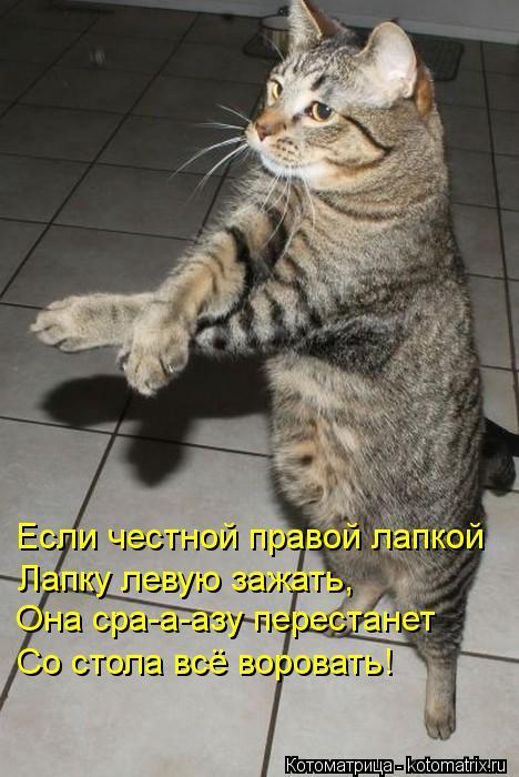 Котоматрица: Если честной правой лапкой Лапку левую зажать, Она сра-а-азу перестанет Со стола всё воровать!
