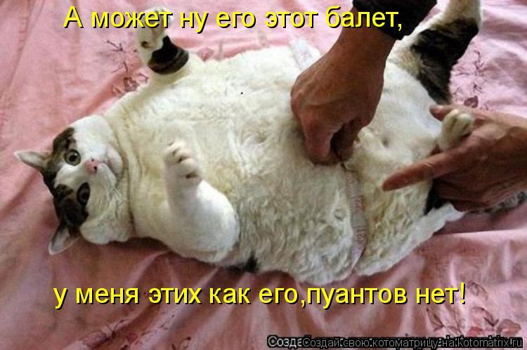 Котоматрица: А может ну его этот балет, у меня этих как его,пуантов нет!