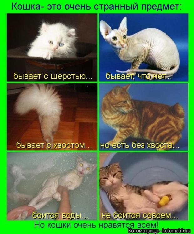 Котоматрица: Кошка- это очень странный предмет: бывает с хвостом...   но есть без хвоста... бывает с шерстью...     бывает, что нет... боится воды...     не боится с