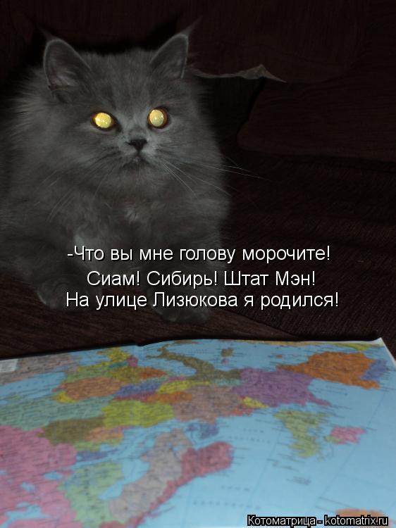 Котоматрица: -Что вы мне голову морочите! Сиам! Сибирь! Штат Мэн! На улице Лизюкова я родился!