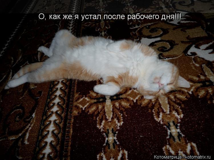 Котоматрица: О, как же я устал после рабочего дня!!!