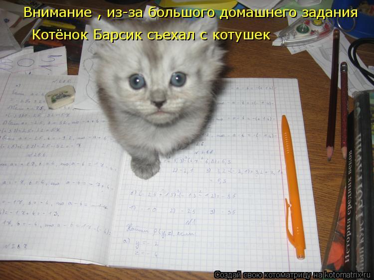 Котоматрица: Внимание , из-за большого домашнего задания  Котёнок Барсик съехал с котушек
