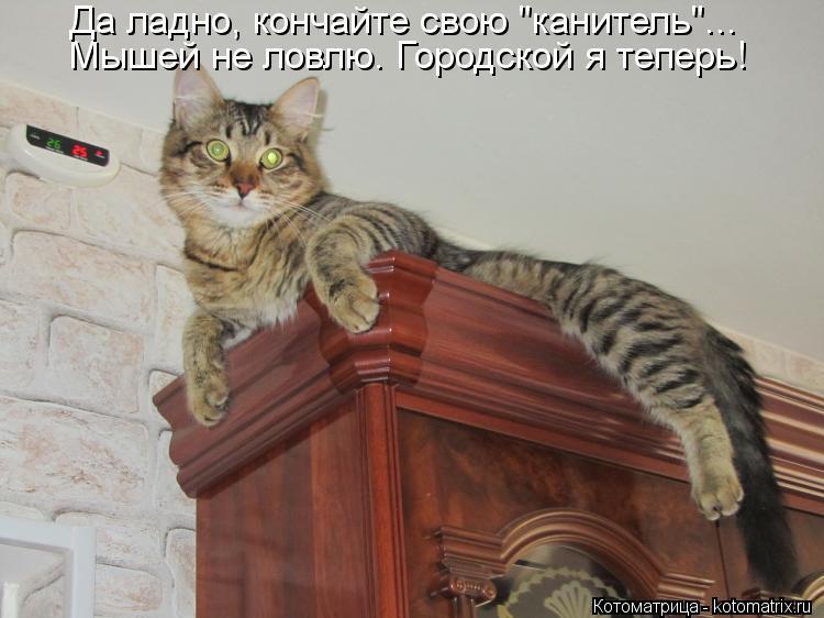 """Котоматрица: Мышей не ловлю. Городской я теперь! Да ладно, кончайте свою """"канитель""""..."""