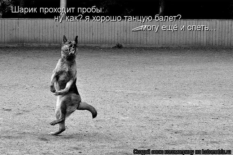 Котоматрица: Шарик проходит пробы: ну как? я хорошо танцую балет? могу ещё и спеть...