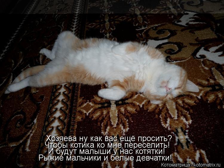 Котоматрица: Хозяева ну как вас ещё просить? Чтобы котика ко мне переселить! И будут малыши у нас котятки! Рыжие мальчики и белые девчатки!
