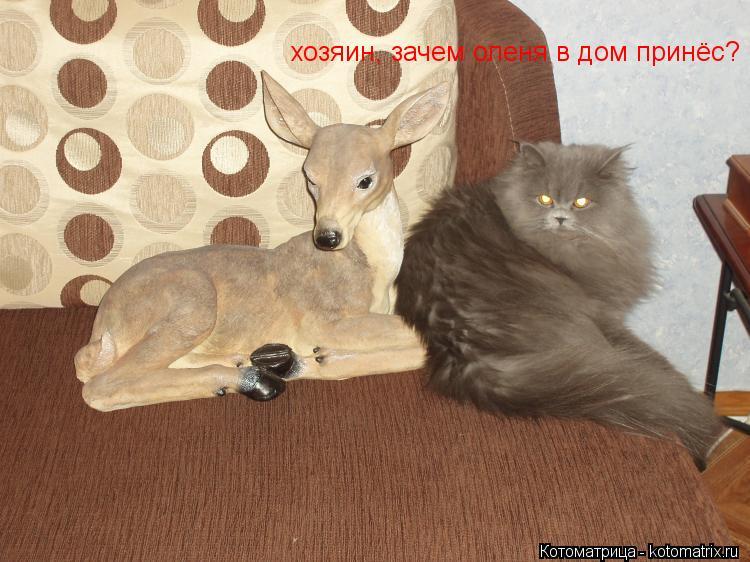 Котоматрица: хозяин, зачем оленя в дом принёс?