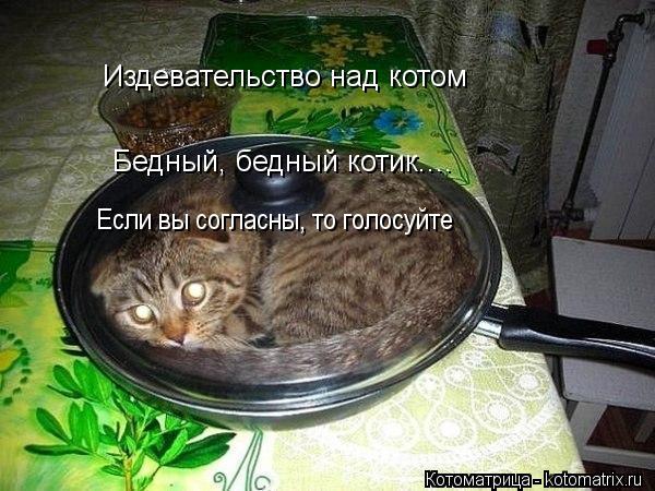 Котоматрица: Издевательство над котом Бедный, бедный котик.... Если вы согласны, то голосуйте