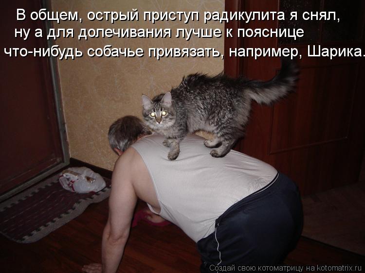 Котоматрица: В общем, острый приступ радикулита я снял, ну а для долечивания лучше к пояснице  что-нибудь собачье привязать, например, Шарика.