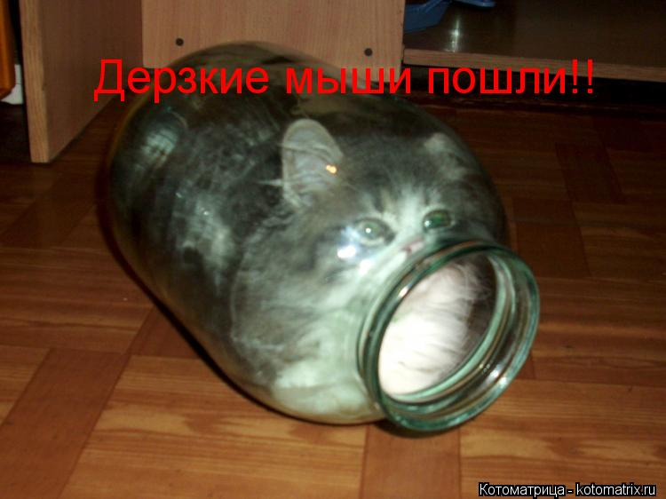 Котоматрица: Дерзкие мыши пошли!! Дерзкие мыши пошли!!