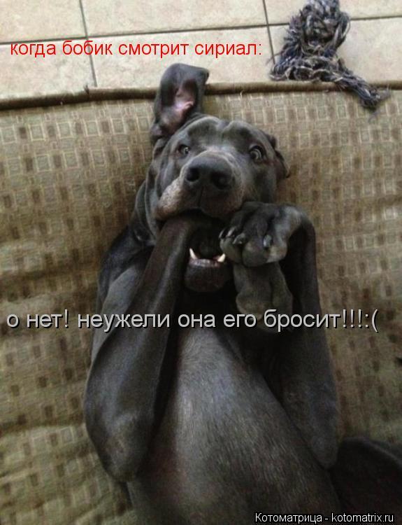 Котоматрица: когда бобик смотрит сириал: о нет! неужели она его бросит!!!:(