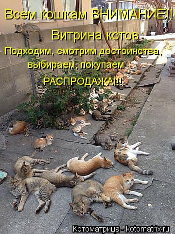 Котоматрица: Витрина котов Всем кошкам ВНИМАНИЕ!!!  Подходим, смотрим достоинства, выбираем, покупаем РАСПРОДАЖА!!!