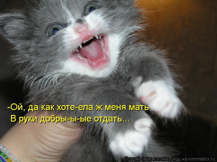 Котоматрица: В руки добры-ы-ые отдать... -Ой, да как хоте-ела ж меня мать
