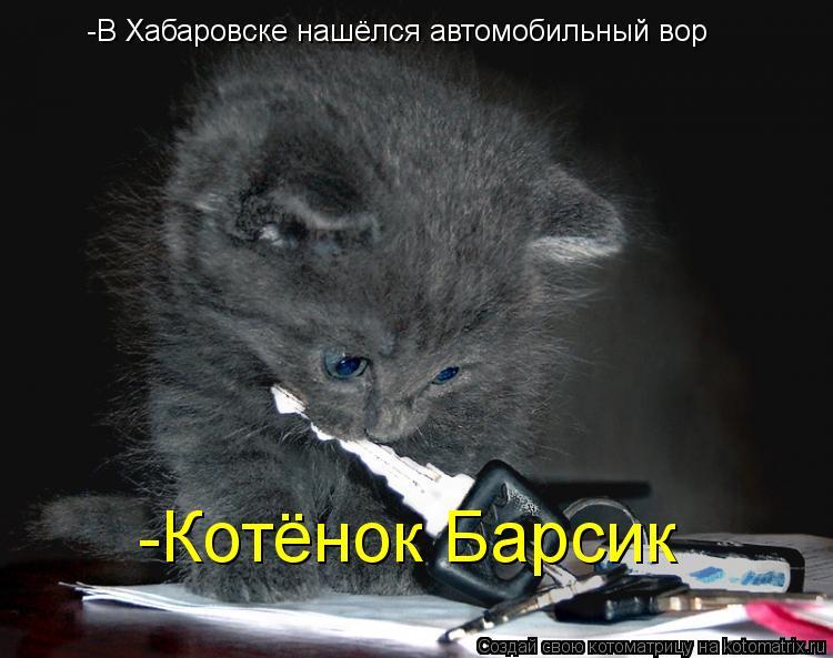 Котоматрица: -В Хабаровске нашёлся автомобильный вор -Котёнок Барсик