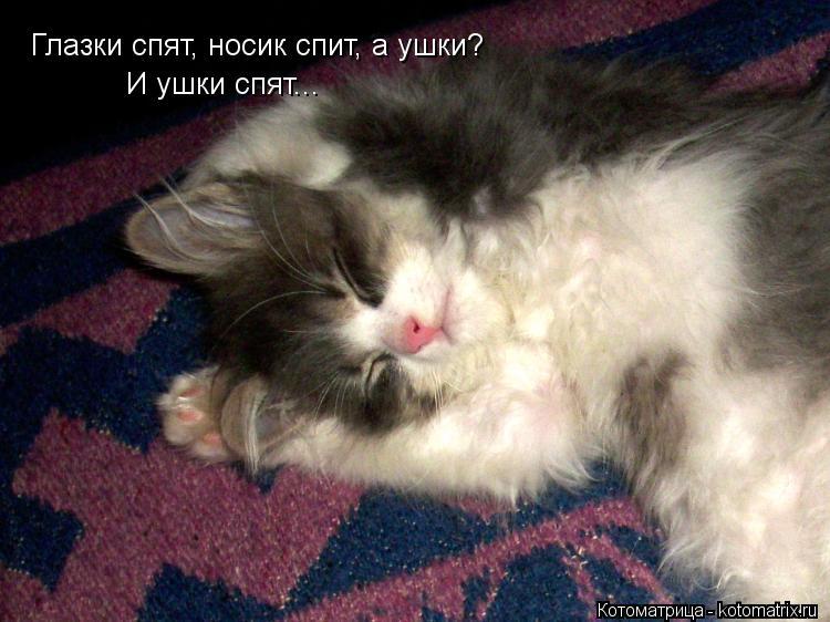 Котоматрица: Глазки спят, носик спит, а ушки? И ушки спят...
