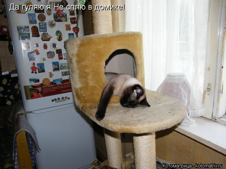 Котоматрица: Да гуляю я!Не сплю в домике!