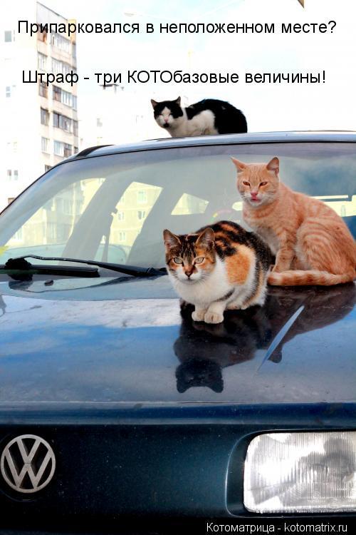 Котоматрица: Припарковался в неположенном месте? Штраф - три КОТОбазовые величины!
