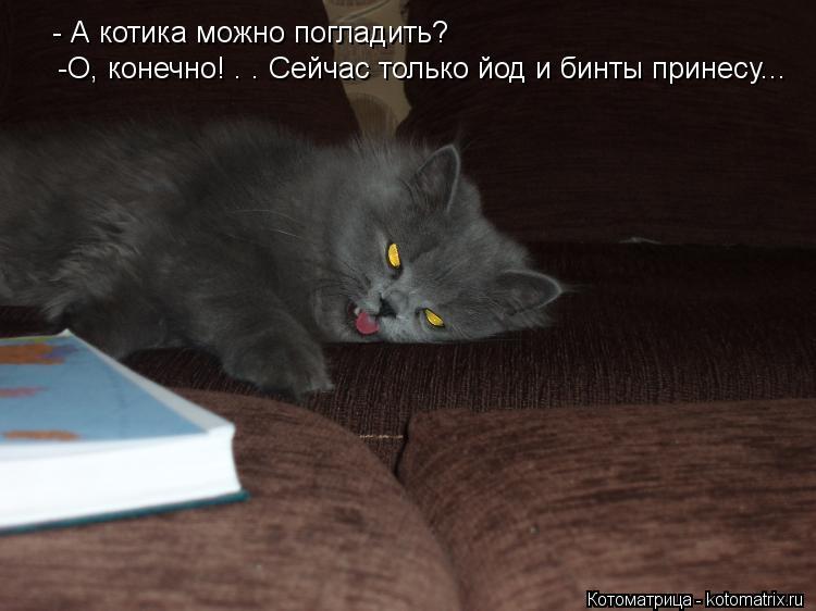 Котоматрица: - А котика можно погладить?  -О, конечно! . . Сейчас только йод и бинты принесу...