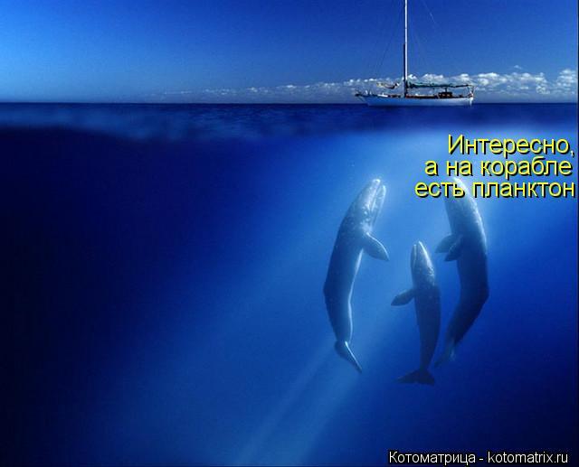 Котоматрица: Интересно, а на корабле есть планктон