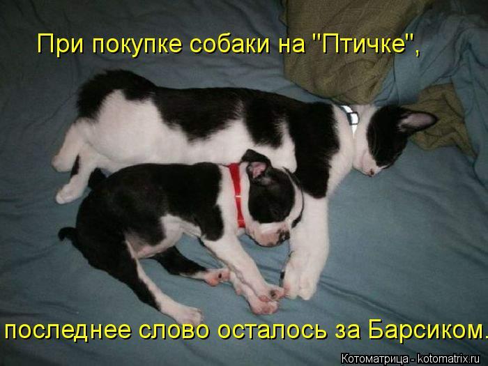 """Котоматрица: последнее слово осталось за Барсиком. При покупке собаки на """"Птичке"""","""