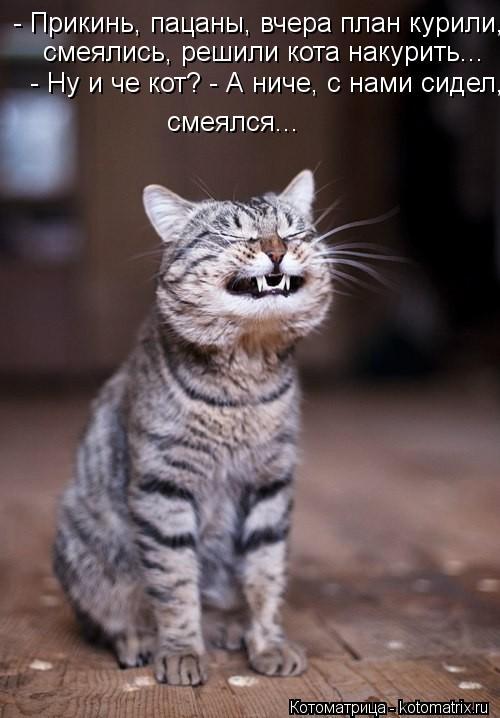 Котоматрица: - Прикинь, пацаны, вчера план курили, смеялись, решили кота накурить...  смеялись, решили кота накурить...  - Ну и че кот? - А ниче, с нами сидел,  см