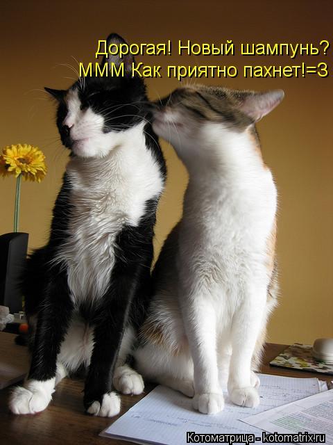 Котоматрица: Дорогая! Новый шампунь? ммм как пахнет*** Дорогая! Новый шампунь? ммм как пахнет*** МММ Как приятно пахнет!=З