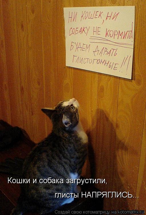 Котоматрица: Кошки и собака загрустили, глисты НАПРЯГЛИСЬ...