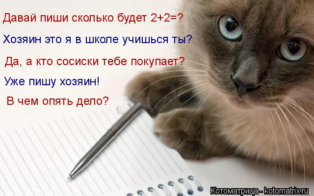 Котоматрица: Давай пиши сколько будет 2+2=? Хозяин это я в школе учишься ты? Да, а кто сосиски тебе покупает? Уже пишу хозяин! В чем опять дело?