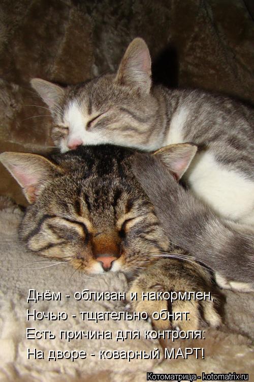 Котоматрица: Днём - облизан и накормлен, Ночью - тщательно обнят. Есть причина для контроля: На дворе - коварный МАРТ!