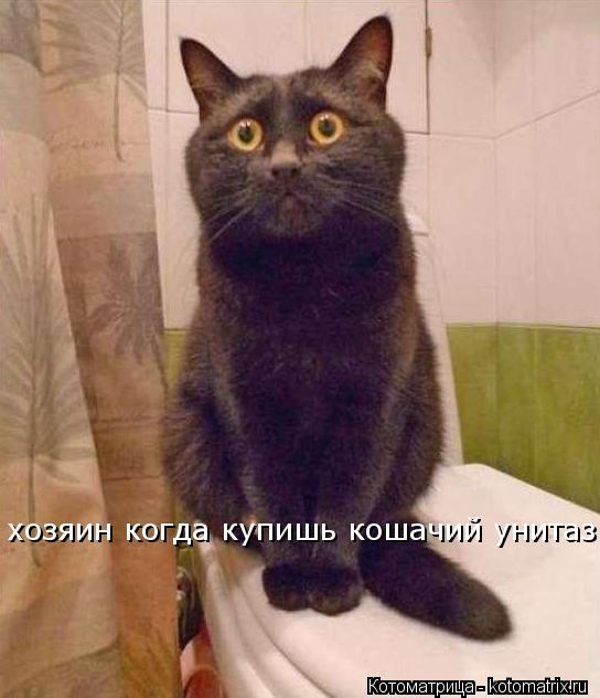 Котоматрица: хозяин когда купишь кошачий унитаз