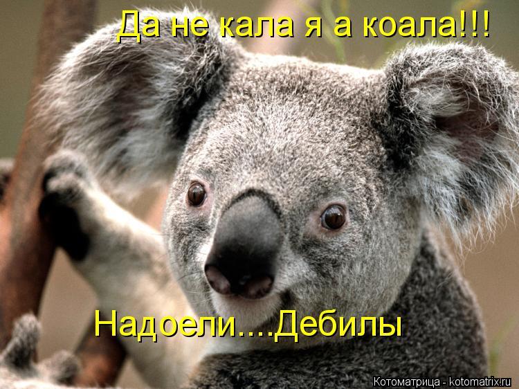 Котоматрица: Да не кала я а коала!!! Надоели....Дебилы Надоели....Дебилы