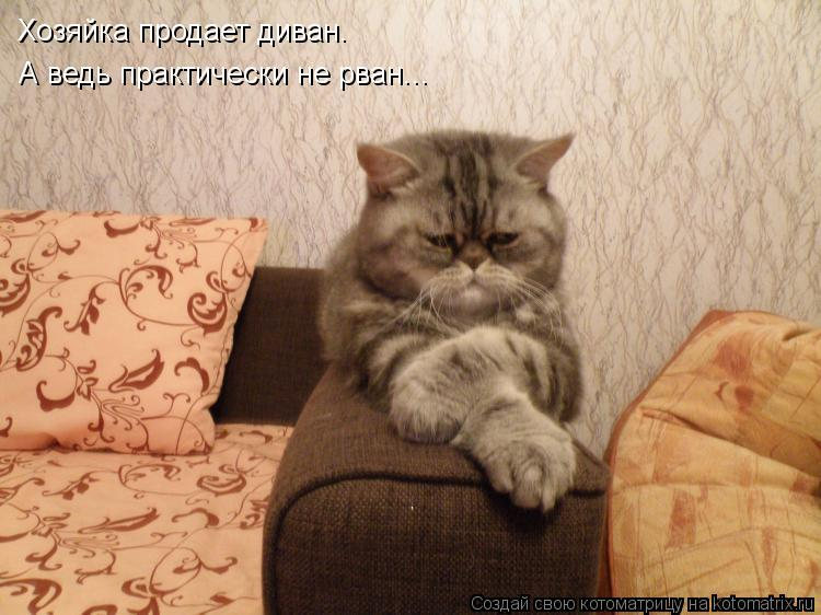 Котоматрица: Хозяйка продает диван. А ведь практически не рван...