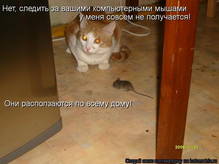 Котоматрица: Нет, следить за вашими компьютерными мышами у меня совсем не получается! Они расползаются по всему дому!
