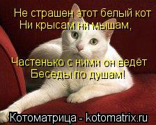 Котоматрица: Не страшен этот белый кот Ни крысам ни мышам, Частенько с ними он ведёт Беседы по душам!