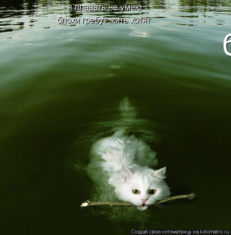 Котоматрица: я плавать не умею блохи гребут жить хотят блохи гребут жить хотят