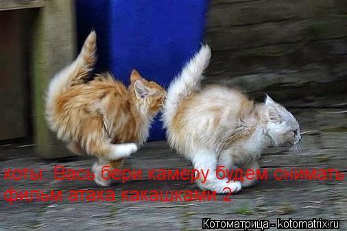 Котоматрица: коты: Вась бери камеру будем снимать фильм фильм атака какашками 2