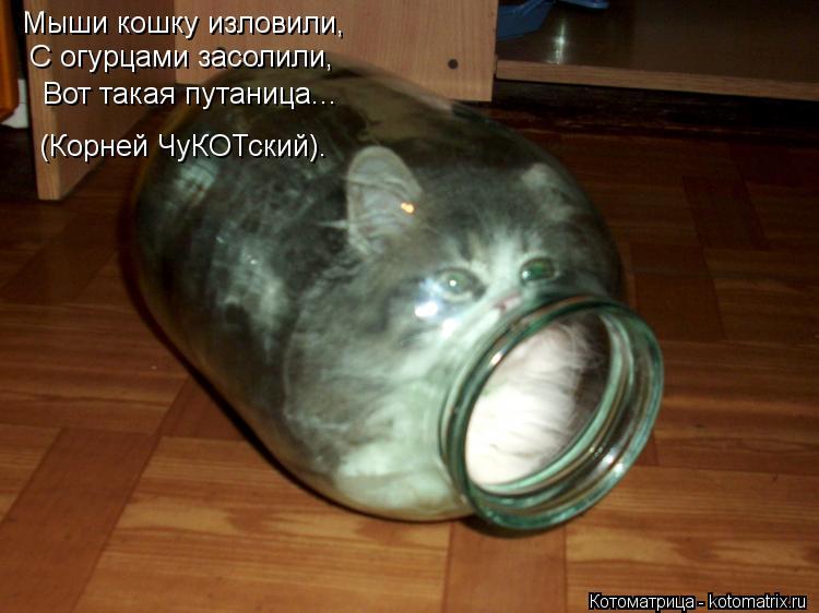 Котоматрица: Мыши кошку изловили, С огурцами засолили, Вот такая путаница... (Корней ЧуКОТский).