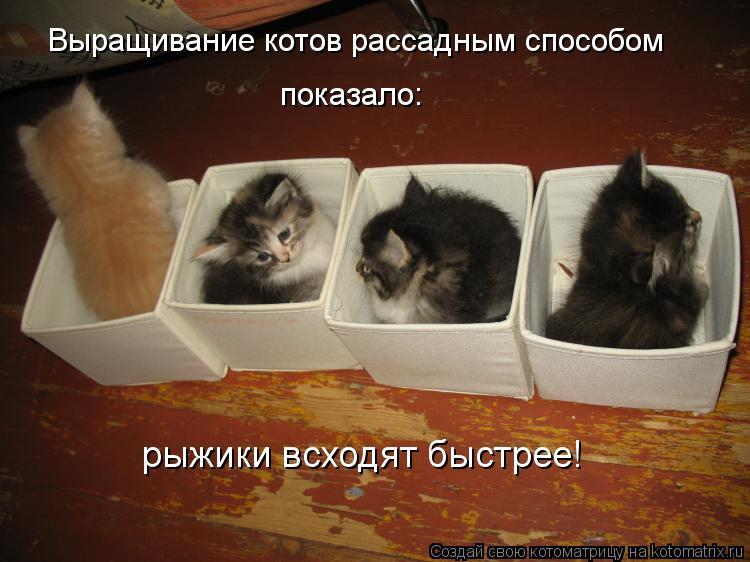 Котоматрица: Выращивание котов рассадным способом показало: рыжики всходят быстрее!
